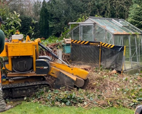 Tree Removal Services in NW