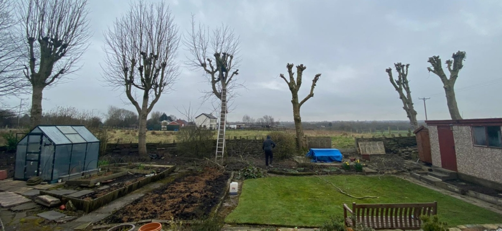 Tree Pruning Northwest Trees and Stumps