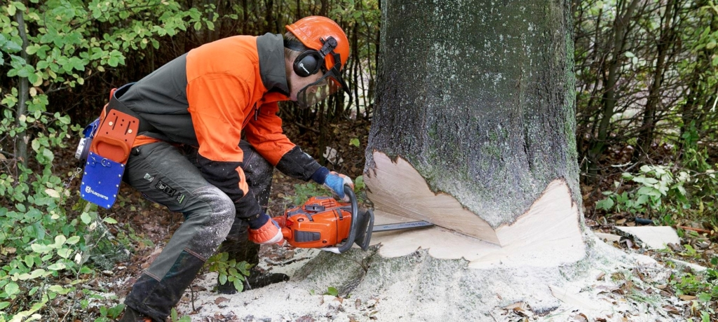 Tree Removal Services in the Northwest