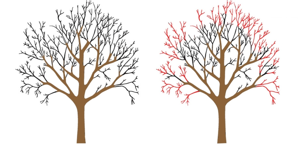 Tree Crown Reductions