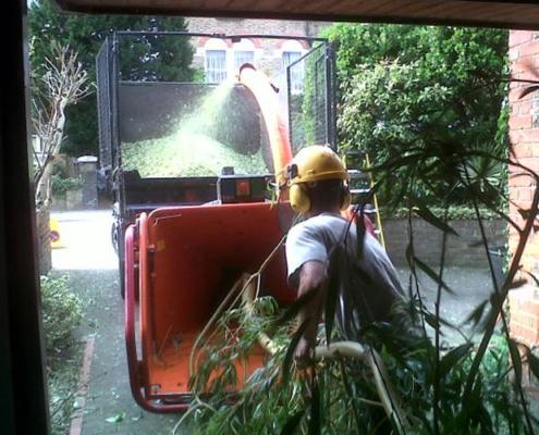 Tree Surgeon tree removal