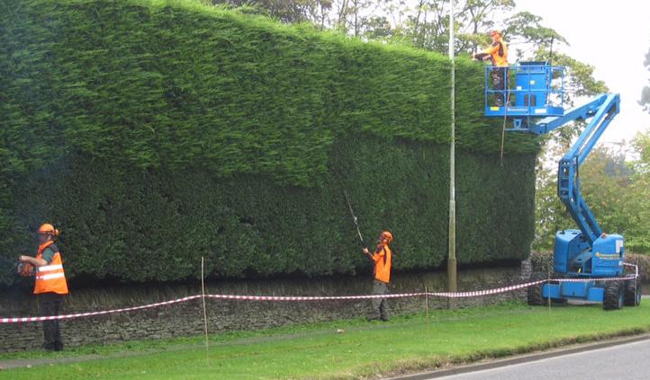 Hedge reduction