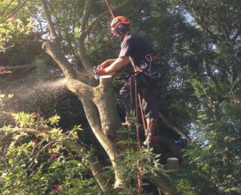 NWTAS Tree Cutting