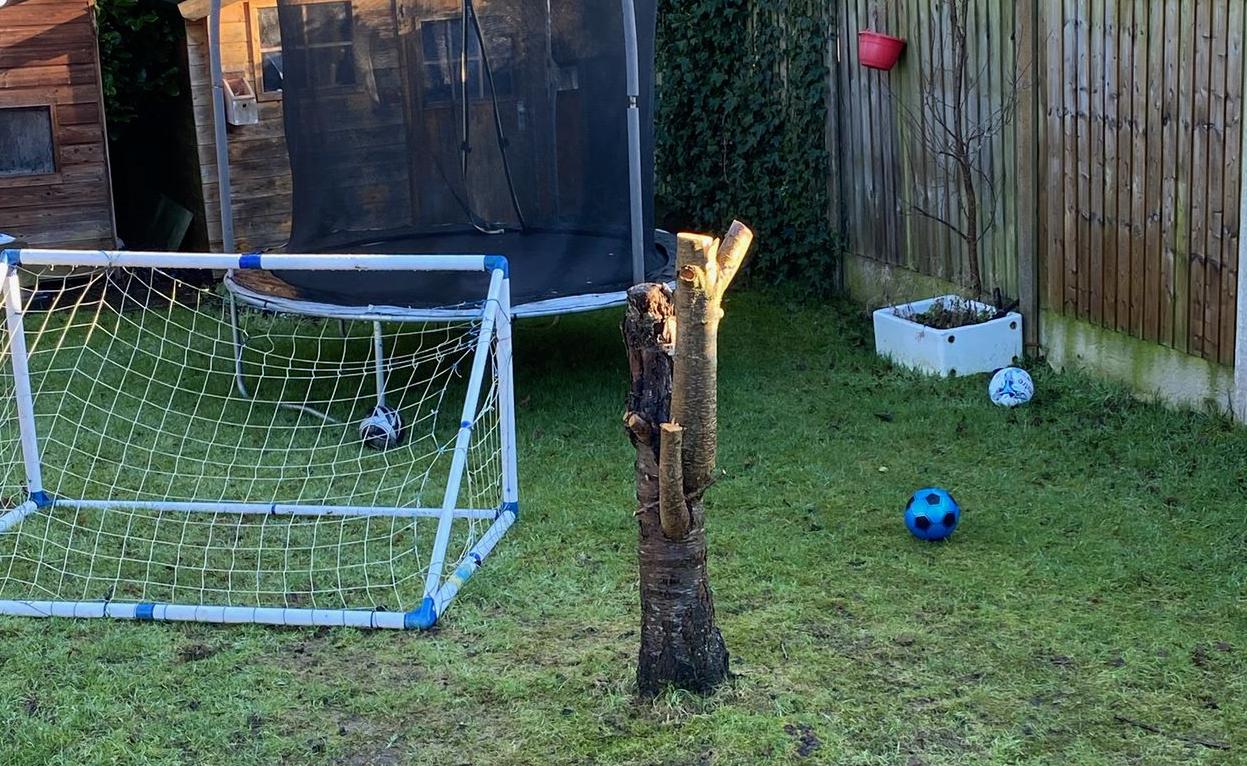 Stump Removal Company Northwest UK
