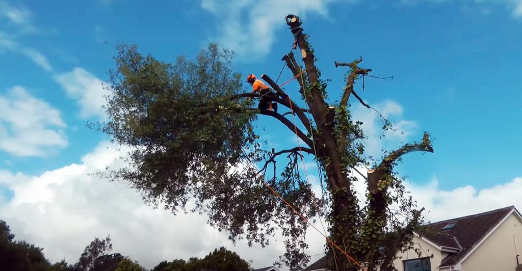 NWTAS Trees 02
