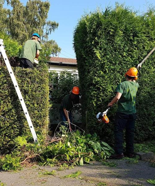 500x600 Hedge work